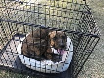 Happy female dog with bed in kennel Stock Photo