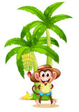 A very happy monkey near the banana plant Royalty Free Stock Images