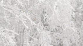 Very heavy snowfall stock video