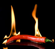 Very hot chili pepper Stock Photo