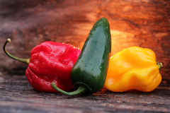 Very hot chili peppers Royalty Free Stock Photo