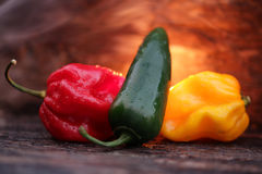 Very hot chili peppers Royalty Free Stock Image