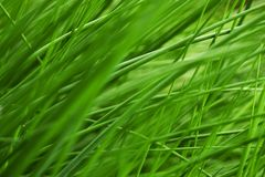 Very juicy grass Stock Photo
