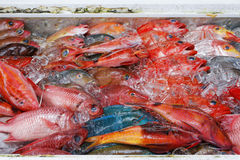 Very kind of fishes in tray Stock Photography