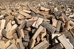 Very large area of hardwood split and spread out laying in the sun to dry stock image