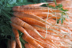 Very large bunch of carrots Stock Images