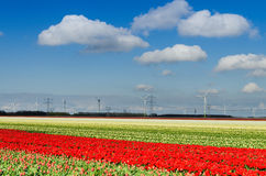 Very large field of tulips and wind turbines Royalty Free Stock Photo