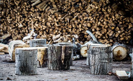 Very large pile of firewood, stacked in an old barn Royalty Free Stock Images