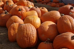 Very large pumkins Royalty Free Stock Images