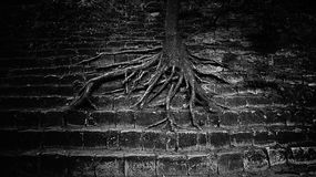 Very large tree roots spread out on the concrete steps. grim beautiful picture. concept triumph of nature over human Stock Images