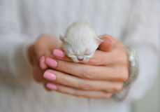 Very little kitten with eyes closed Royalty Free Stock Images