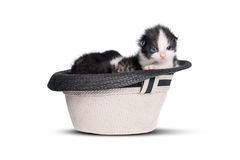 Very little kitten in a hat on pure white background. Royalty Free Stock Image
