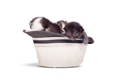 Very little kitten in a hat on pure white background in studio. Stock Photography