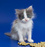 Very little kitten looks admiringly Stock Image