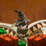 Very little puppy sitting sadly wearing a witch's hat and gift boxes around him. Happy Halloween postcard Stock Photo