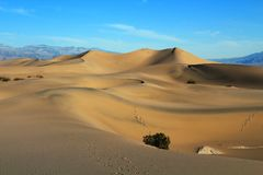 Towering Sand Dunes at Mesquite Flats in Morning Light, Death Valley National Park Stock Photo