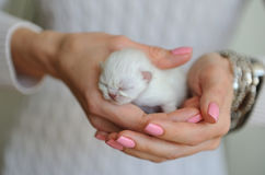 Very little white kitten with eyes closed Royalty Free Stock Photo