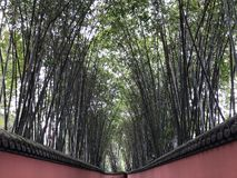 Very long red wall path, with tall, straight bamboos on both sides stock image