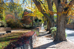 A Very Long Sidewalk. Lined by trees, plants, and grass with beautiful autumn colors Stock Image