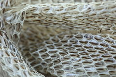 Very Long White Shedding Snake Skin on Wooden Floor. Close up Macro selective focus, blur some spots Stock Photography