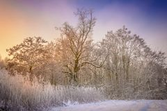 A cold forest and a snowy meadow. Very low ambient temperature, windless weather and very high humidity contributed to such a magnificent frosting of trees Stock Photos