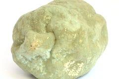 Very moldy lemon Stock Images