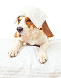 Very much sick dog Royalty Free Stock Images