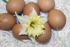 Nice colorful easter eggs with flower stock images