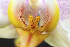 Very nice colorful orchid  close up in my room Stock Image