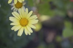 Nice colorful summer flower close up in my garden Stock Photography