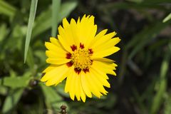 Very nice colorful summer flower in my garden Stock Photo