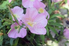 Very nice colorful summer weed flower in my garden Royalty Free Stock Photo