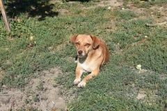 My nice dog in my garden stock photo