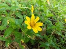 beaitiful yellow color photo of sri lanka stock images