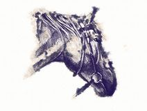 Freehand horse head pencil drawing Stock Images