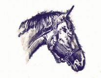 Freehand horse head pencil drawing Royalty Free Stock Image