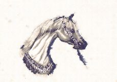 Freehand horse head pencil drawing Royalty Free Stock Photo