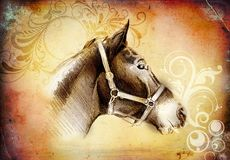 Freehand horse head pencil drawing. A very nice freehand horse head pencil drawing Royalty Free Stock Image