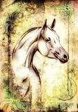 Freehand horse head pencil drawing. A very nice freehand horse head pencil drawing Royalty Free Stock Photography