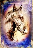 Freehand horse head pencil drawing. A very nice freehand horse head pencil drawing Stock Image