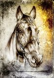Freehand horse head pencil drawing. A very nice freehand horse head pencil drawing Stock Photo