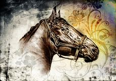 Freehand horse head pencil drawing. A very nice freehand horse head pencil drawing Royalty Free Stock Photos