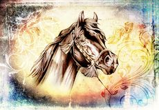 Freehand horse head pencil drawing. A very nice freehand horse head pencil drawing Royalty Free Stock Images