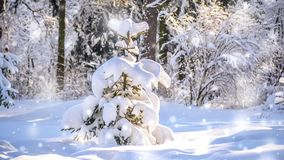 Very nice little Christmas tree in the woods with snow. Cinemagraph seamless loop animation motion gif render background stock footage