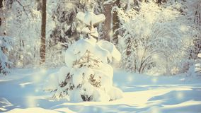 Very nice little Christmas tree in the woods with snow. Christmas Winter New Year background. Cinemagraph seamless loop animation motion gif render background stock video
