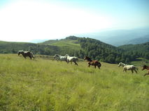 Very nice mountain horses lergand Royalty Free Stock Images