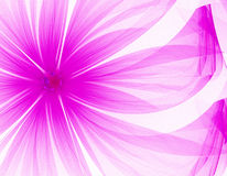 Very nice purple flower Royalty Free Stock Image