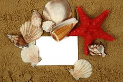 Sand frame with the shells Stock Image