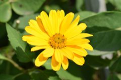Very nice summer close up in my garden Royalty Free Stock Photography