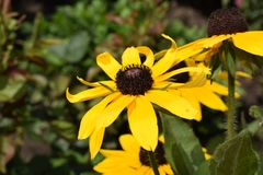Very nice summer close up in my garden Royalty Free Stock Image